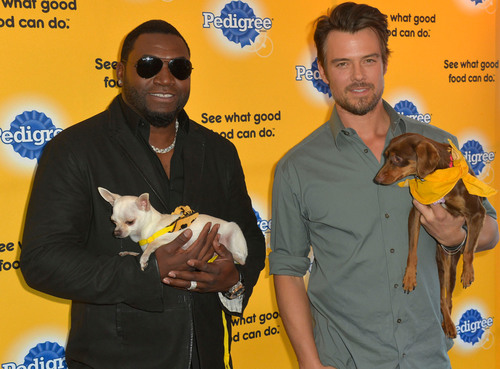 On January 20, 2014, shelter dog ambassadors David Ortiz and Josh Duhamel kicked-off the PEDIGREE(r) Brand See what good food can do.(tm) campaign at the Sundance Film Festival. Ortiz and Duhamel announced the Brand's new campaign and effort to celebrate the stories of shelter dogs' transformations into pets with loving homes. Every time dog lovers tell their tale of what their dog means to them, using #DogTales on Facebook, Twitter or Instagram, PEDIGREE(r) will donate a bowl of food to a shelter in need. (PRNewsFoto/PEDIGREE) (PRNewsFoto/PEDIGREE)