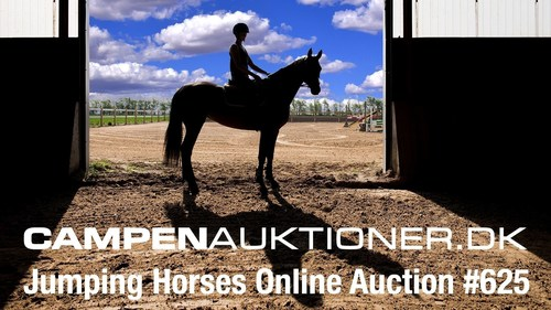 A rare auction of outstanding young horses (PRNewsFoto/Campen Auktioner)