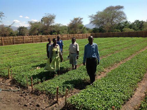 Malawian farmers in a field of chillies (PRNewsFoto/AgDevCo_)