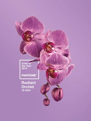 Pantone Reveals Color of the Year for 2014: PANTONE 18-3224 Radiant Orchid.  (PRNewsFoto/Pantone LLC)