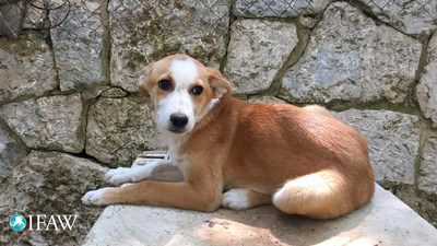 IFAW provides second chance for dogs and kittens from Lebanon (c) Animals Lebanon