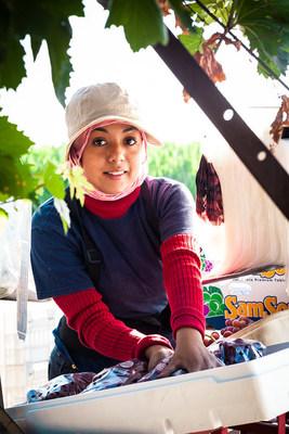Fruit packing at Fowler Packing (Fresno, California)