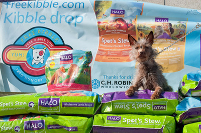 Homeless pets across the nation will receive 500,000 healthy meals from Halo, Purely for Pets and Freekibble.com during the annual Holiday Kibble Drop.  (PRNewsFoto/Halo, Purely for Pets, J. Nichole Smith)