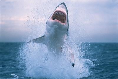 La Semana del Tiburon regresa a Discovery en Espanol el 26 de junio