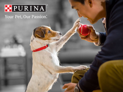 Nestle Purina Discovers Breakthroughs to Help Aging Pets Sustain Brain Health
