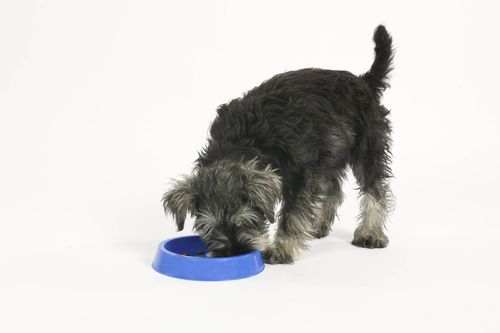 Research Finds That Small Dogs Can't Go Without Their Toothbrushes (PRNewsFoto/Mars Petcare)