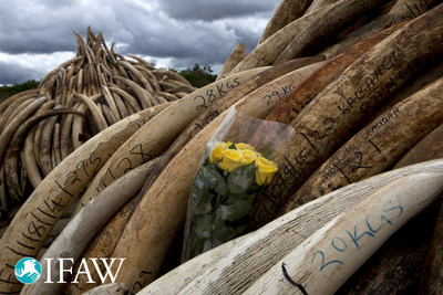 IFAW: Largest ivory crush ever in Kenya sends message to poachers