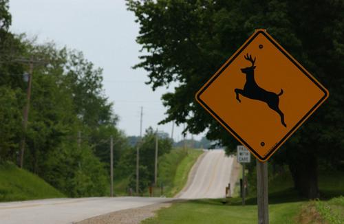 U.S. Deer-Vehicle Collisions Fall 7 Percent