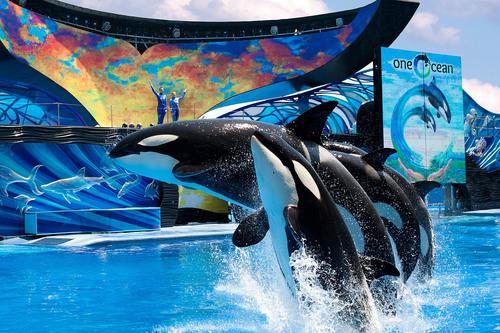 "SeaWorld Entertainment, Inc. (""SeaWorld Entertainment""), a leading theme park and entertainment ..."
