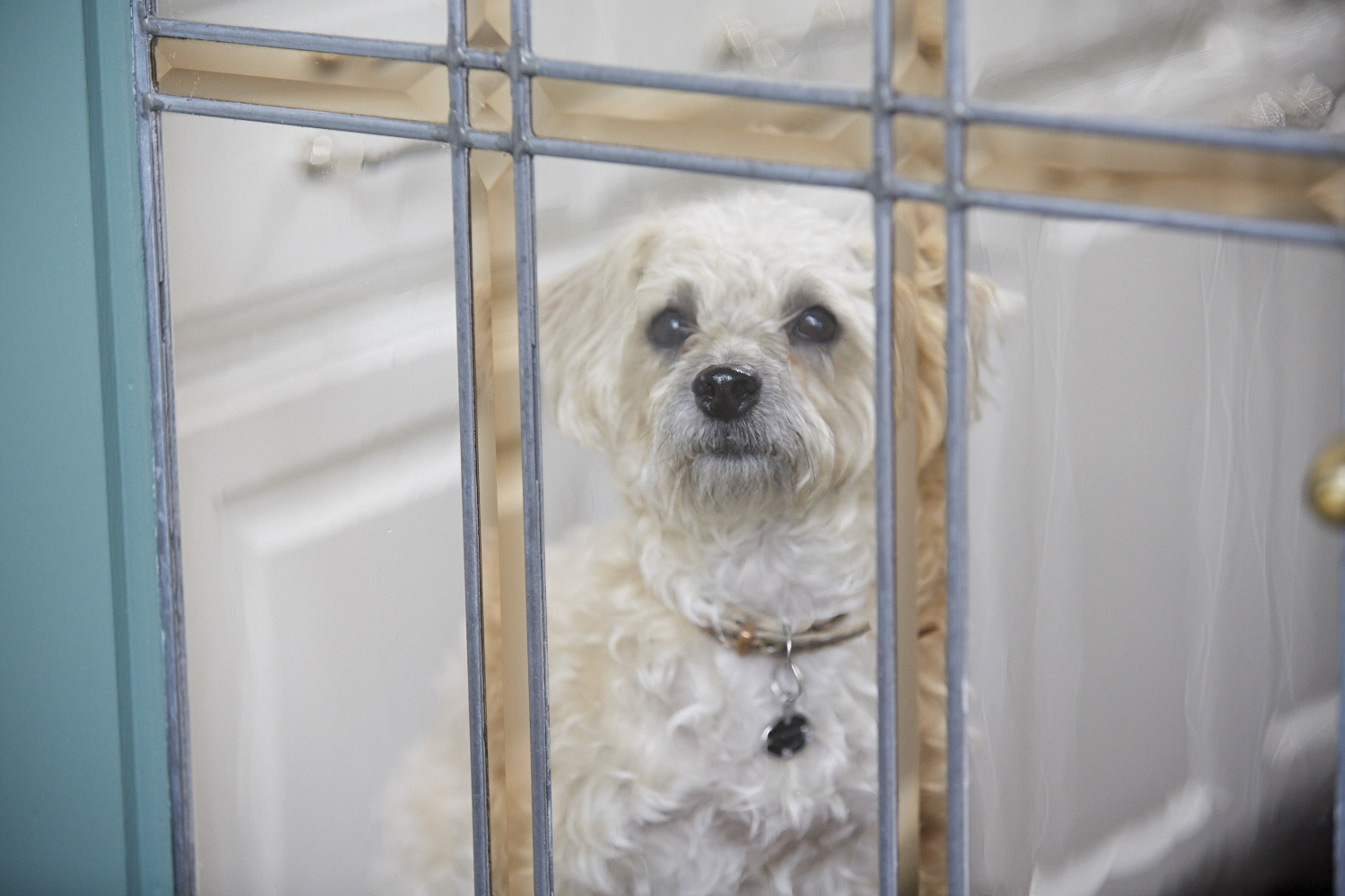 """Max, above, is one of the rescue dogs starring in the Coldwell Banker Real Estate """"Home's Best Friend"""" television commercial. Coldwell Banker Real Estate has joined with Adopt-a-Pet.com to find homes for 20,000 dogs like Max in 2015."""
