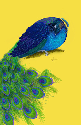 """""""The Beauty That Sleeps"""" - Peacock Painting by Nicole Cleary.  (PRNewsFoto/nmbdesigner)"""