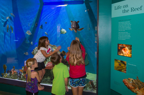 At the new Dalton Discovery Center at the Conservancy of Southwest Florida, guests  enjoy more than 100 animals  ...