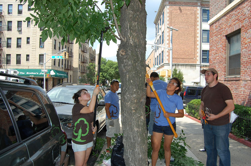 Preparing NYC Youth For Green Jobs