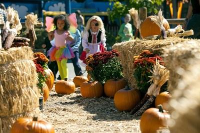 Knott's Spooky Farm Hay Maze