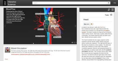 A session on blood circulation from Gale Interactive: Science
