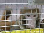 SOKO Tierschutz und BUAV fordern erneut eine unabhängige Kontrolle der Primatenversuche am Max-Planck-Institut für Biologische Kybernetik