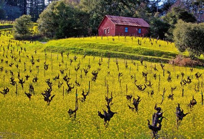 Gnarly vines are a familiar winter scene as visitors explore wineries and eateries in California wine country.