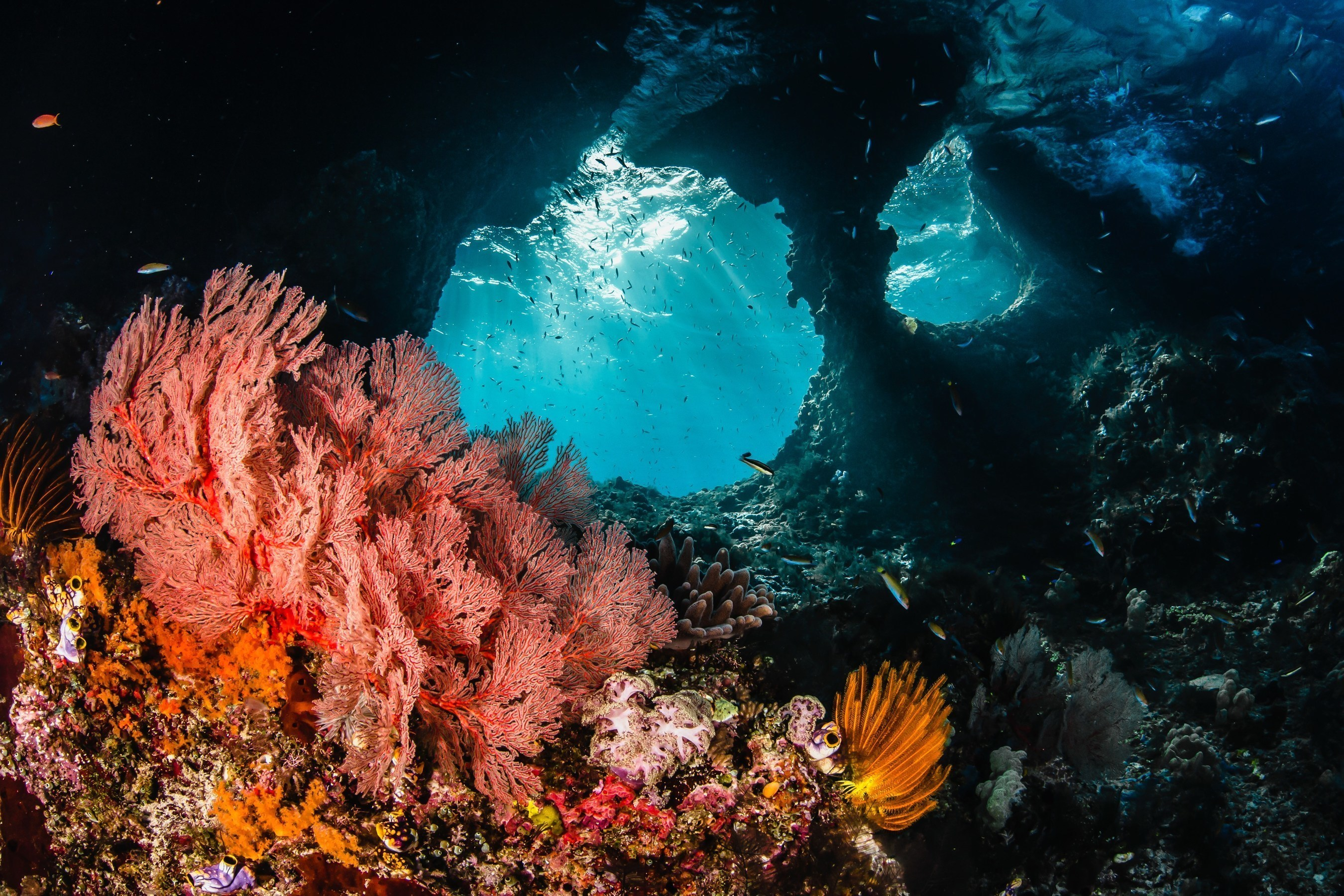 Morning rays burst through a window illuminating the brilliant reefs of Raja Ampat, Indonesia. Credit: Shawn Heinrichs