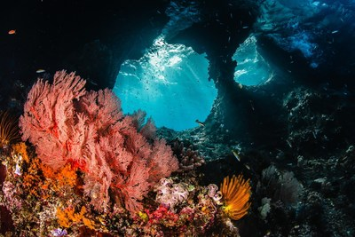 Morning rays burst through a window illuminating the brilliant reefs of Raja Ampat, Indonesia. Credit: Shawn Heinrichs