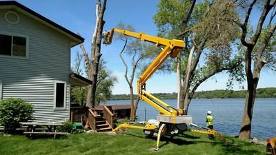 Tree service industry