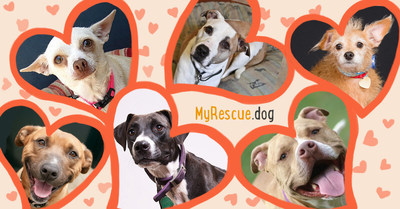 Help homeless dogs by posting your rescue dog photos & voting on your favorites at MyRescue.dog