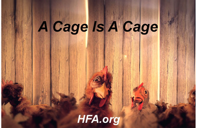 From the Humane Farming Association's animation.  (PRNewsFoto/Humane Farming Association)
