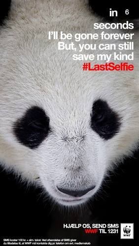 Panda #LastSelfie (PRNewsFoto/Grey)