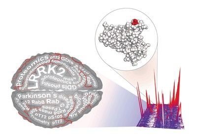 Parkinson's researchers used proteomics to identify Rab proteins as a physiologic substrate of LRRK2, a Parkinson's drug target. This finding may accelerate current research and open a novel therapeutic avenue.