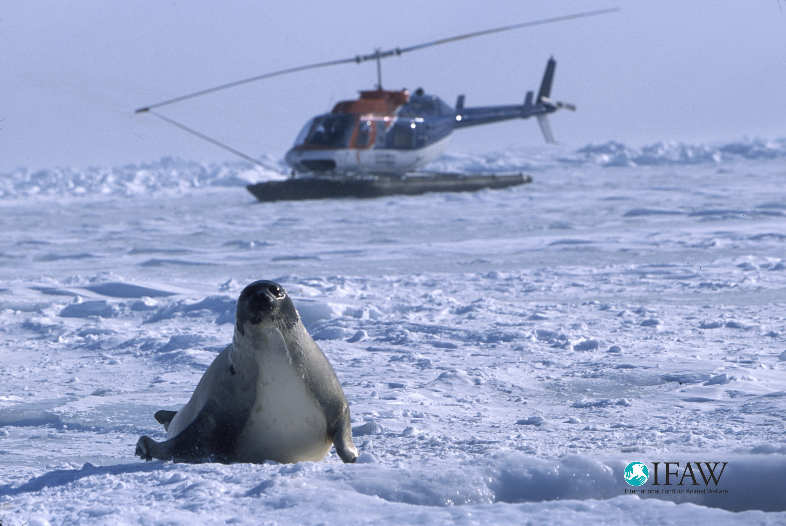 Discovery Channel premieres 'Huntwatch' - the story behind Canada's controversial seal slaughter