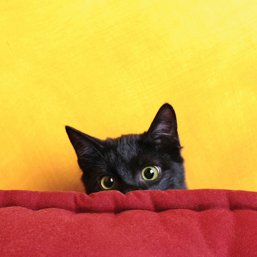 Black Cats are 'Lucky' After All