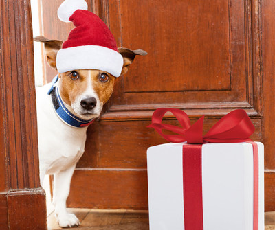 Holiday shopping? Don't forget the family pet!
