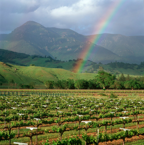 Treasury Wine Estates Announces 100% Sustainability Certification on All California Vineyards