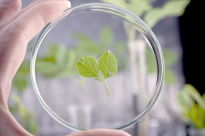 Frutarom Launches New Phytopharmaceutical Ingredients Line. (PRNewsFoto/Frutarom Health BU)