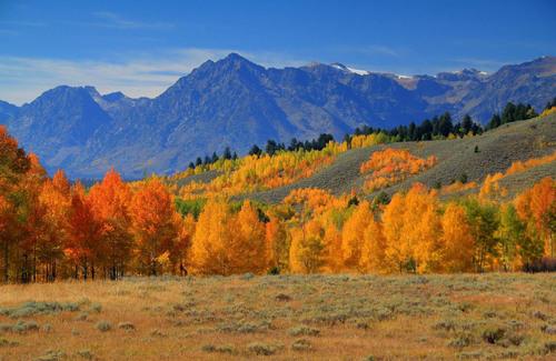 TripAdvisor survey reveals 86 percent of Americans are planning to travel this fall.  (PRNewsFoto/TripAdvisor)