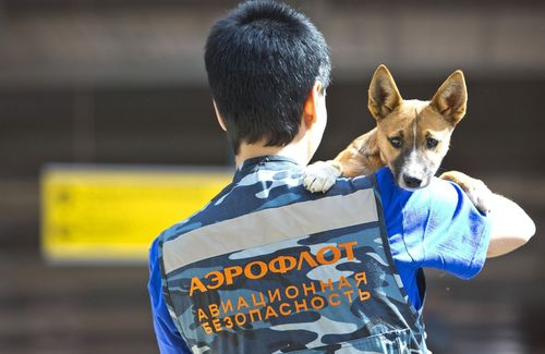 AEROFLOT SECURITY DOGS UNIT ANNOUNCES SCIENTIFIC BREAKTHROUGH (PRNewsFoto/Aeroflot)