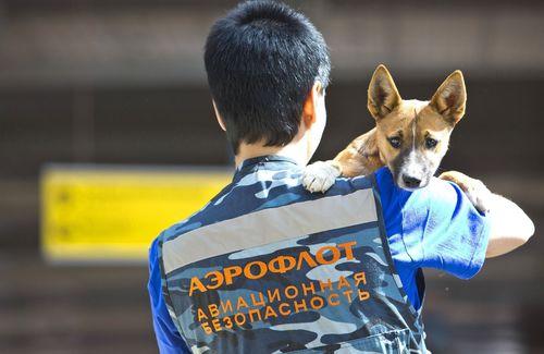 AEROFLOT SECURITY DOGS UNIT ANNOUNCES SCIENTIFIC BREAKTHROUGH (PRNewsFoto/Aeroflot)