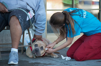 Veterinarians took their services into nine communities across the country for Make a Difference Day.