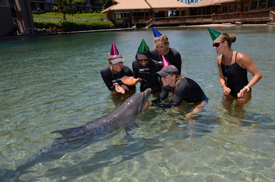 Happy Birthday Lehua! Dolphin Quest Hawaii's First Dolphin Grandbaby Turns 1 Year Old! Great YouTube video.  (PRNewsFoto/Dolphin Quest)
