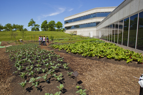 Kraft foods fights hunger literally in its own backyard - Kraft foods chicago office ...
