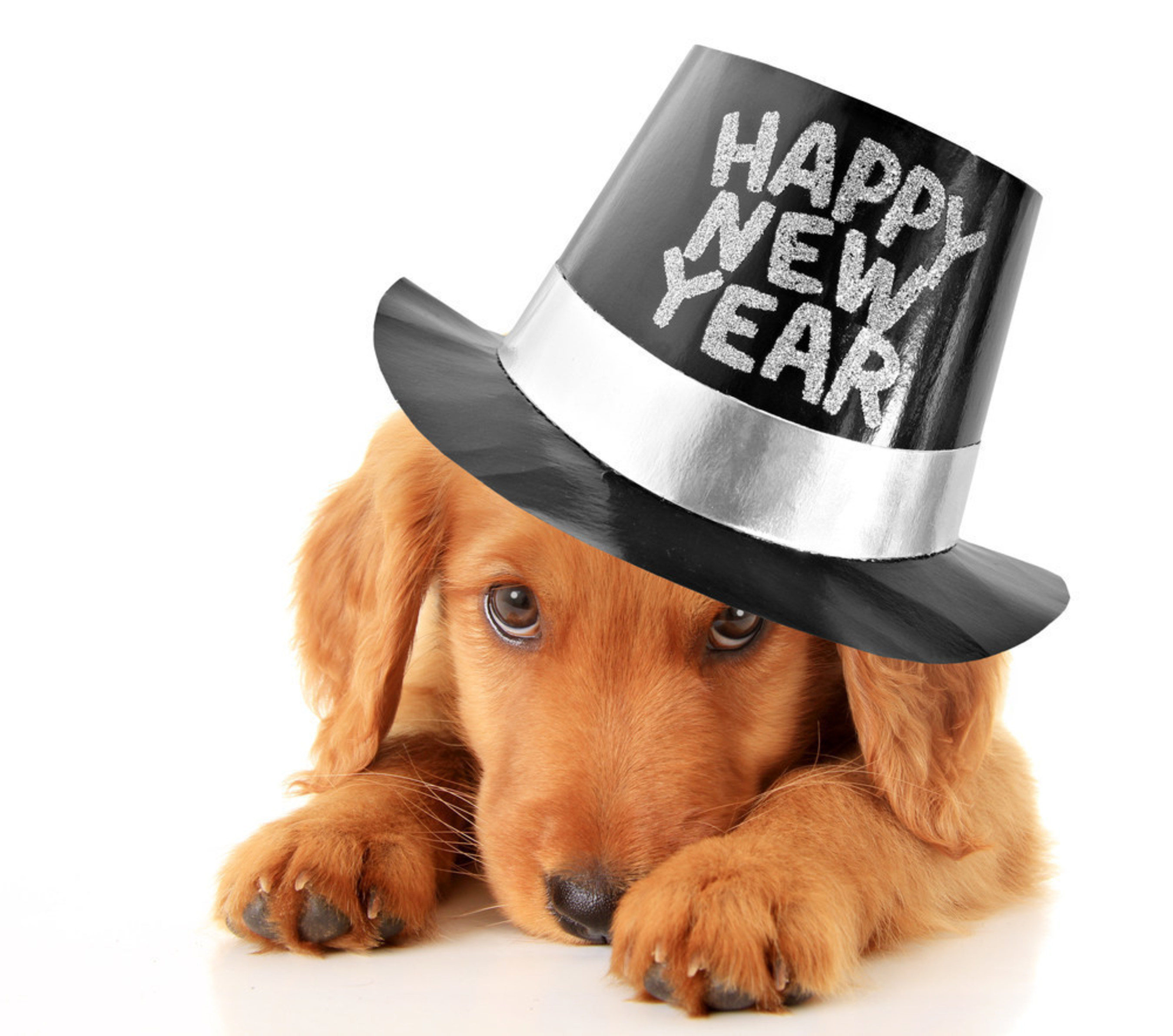 Five New Year Resolutions Every Pet Parent Should Make for 2016