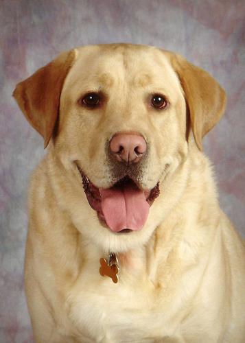 "Award Winning Author and Dog ""MAX"".  (PRNewsFoto/Read With Max, LLC)"