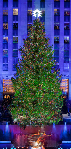 The 2012 Rockefeller Center Christmas Tree will be donated to Habitat for Humanity to help build homes in New York City and Morris, N.J. (Photo courtesy of Tishman Speyer/ Photographer Gregory Scaffidi).  (PRNewsFoto/Habitat for Humanity International)