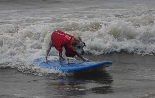 Surfing Dogs Raise More Than $100K to Help Orphaned Animals
