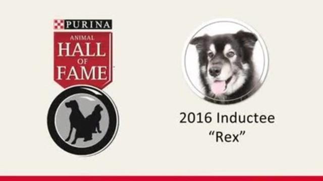 Video: Rex