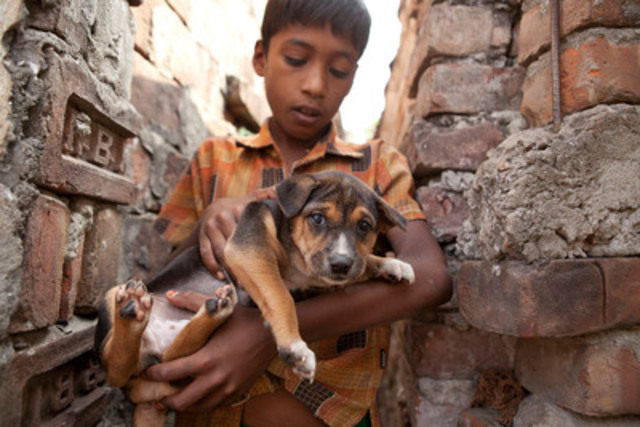 A lucky puppy in Bangladesh about to receive a life-saving vaccination thanks to World Animal Protection supporters. © World Animal Protection (CNW Group/World Animal Protection)