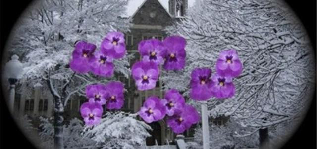 Cette image est fondée sur la description suivante fournie par un patient atteint de glaucome. « Mes murs sont recouverts de fleurs mauves. Même quand je vais à l'extérieur, les gazons et les sentiers sont tapissés de ces mêmes fleurs mauves. » (Groupe CNW/INCA)