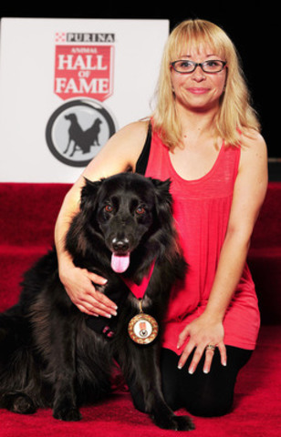 Vicious, a 12 year old Border Collie/Labrador cross from Trail, British Columbia, was inducted into the Purina Animal Hall of Fame today for saving the life of Angie Prime. When a cougar wandered into Angie's home last August and jumped on her, Vicious launched into action, fearlessly lunging at the cougar and chasing it out of the house. (CNW Group/Purina Animal Hall of Fame)