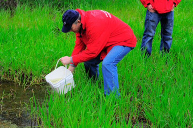 Releasing Oregon spotted frog tadpoles in Aldergrove Lake Regional Park in British Columbia. (CNW Group/Earth Rangers)