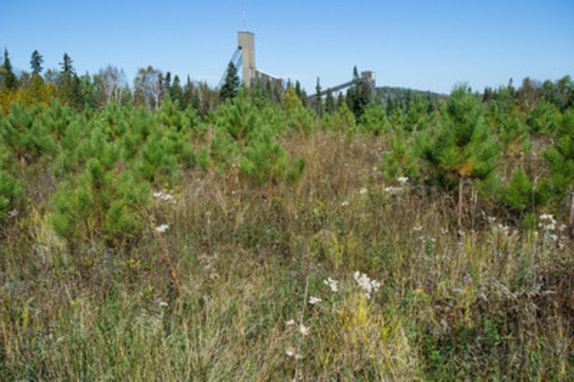 One of Barrick Gold's progressive rehabilitated sites at Hemlo, planted in 2006. The David Bell mine head frame is in the background. (CNW Group/Mining Association of Canada (MAC))