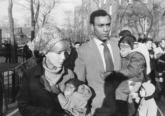 Garry Winogrand - Central Park Zoo, New York City - 1967 Gelatin silver print 22.9 x 34 cm Art Gallery of Ontario Purchase, with funds generously donated by Martha LA McCain, 2015. © The Estate of Garry Winogrand, courtesy Fraenkel Gallery, San Francisco. (CNW Group/Art Gallery of Ontario)